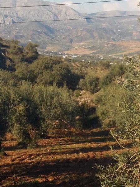 Olivares, valle del Guadalhorce