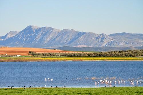 Reserva Natural Lagunas de Campillos - Laguna Dulce