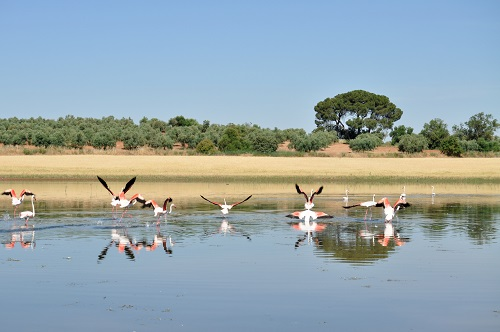 Reserva Natural Lagunas de Campillos - Laguna del Toro