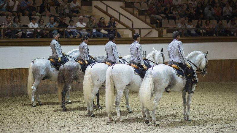 Fundación Real Escuela Andaluza de Arte Ecuestre, Jerez de la Frontera