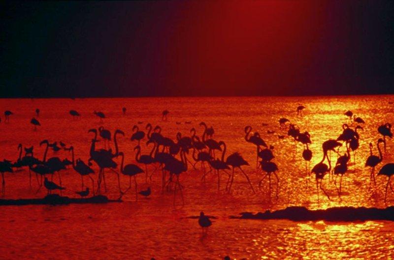 Sonnenuntergang und Vogelbeobachtung im Sumpfgebiet Marismas del Odiel