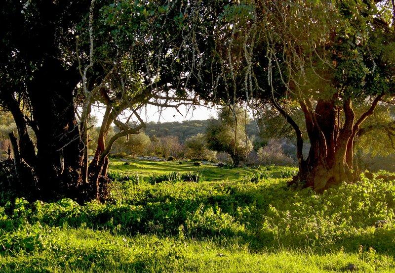 Hostal de Naturaleza Cañada Verde
