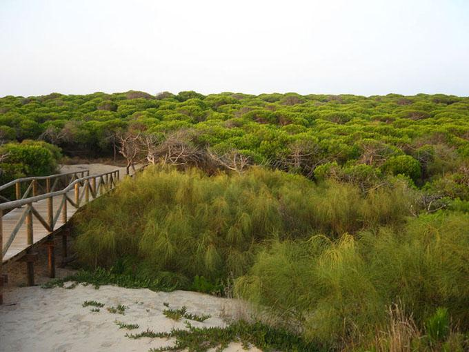 Punta Candor