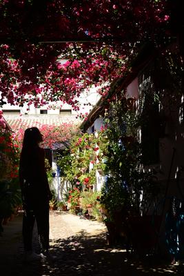 Cordoue, ses patios, sa Feria et le meilleur vin Montilla-Moriles