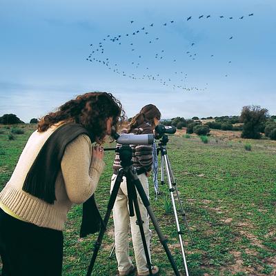 Bird-watching Tourism