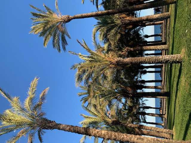 Palmeral en Playamar