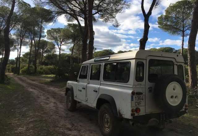Ruta 4x4 zona sur Doñana