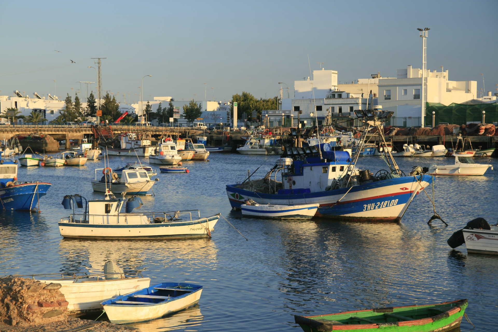 Birds and heritage of the marshland and port of Isla Cristina