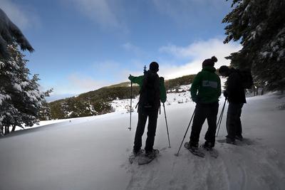 Snowshoeing through the woods in Sierra Nevada