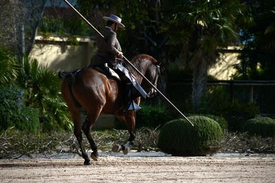 Equestrian ballet