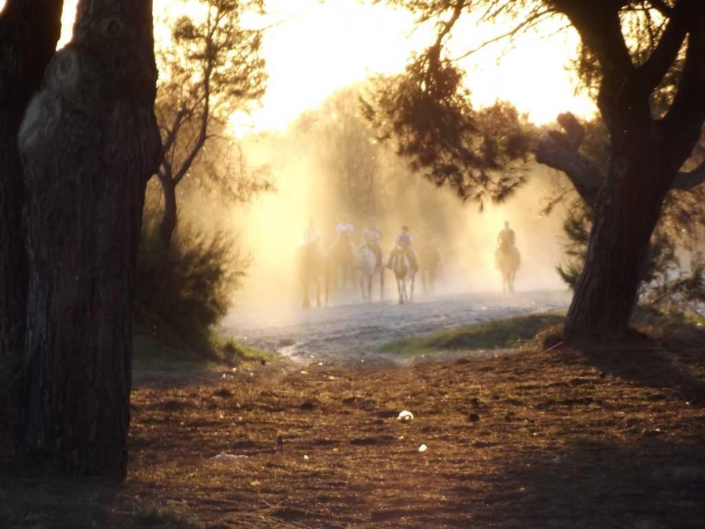 Hamelin: Ruta Doñana Sunset - Actividad  (Almonte)
