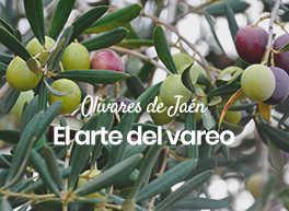 Olivares de Jaén, el arte del vareo