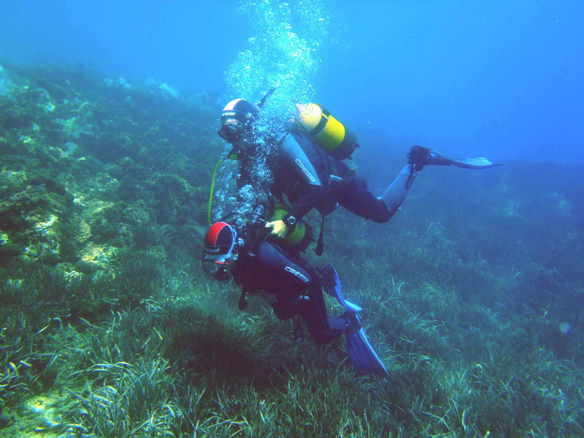 Hamelin: Descubre el buceo de una forma diferente - Actividad  (Aguadulce)