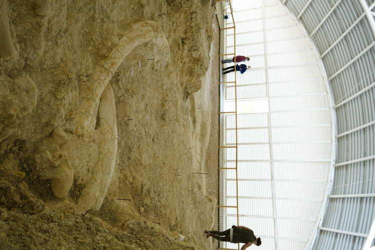 Yacimientos Paleontológicos de Orce