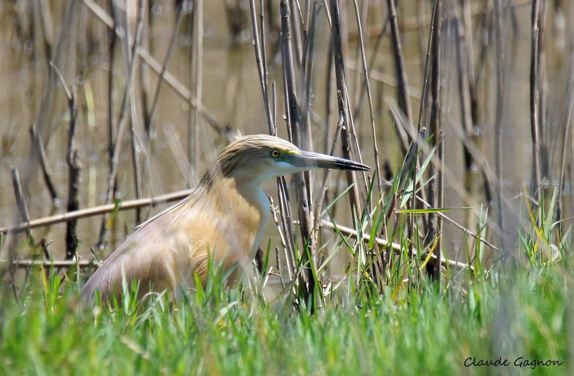 ¡Doñana Norte, una diversidad de aves impresionante!