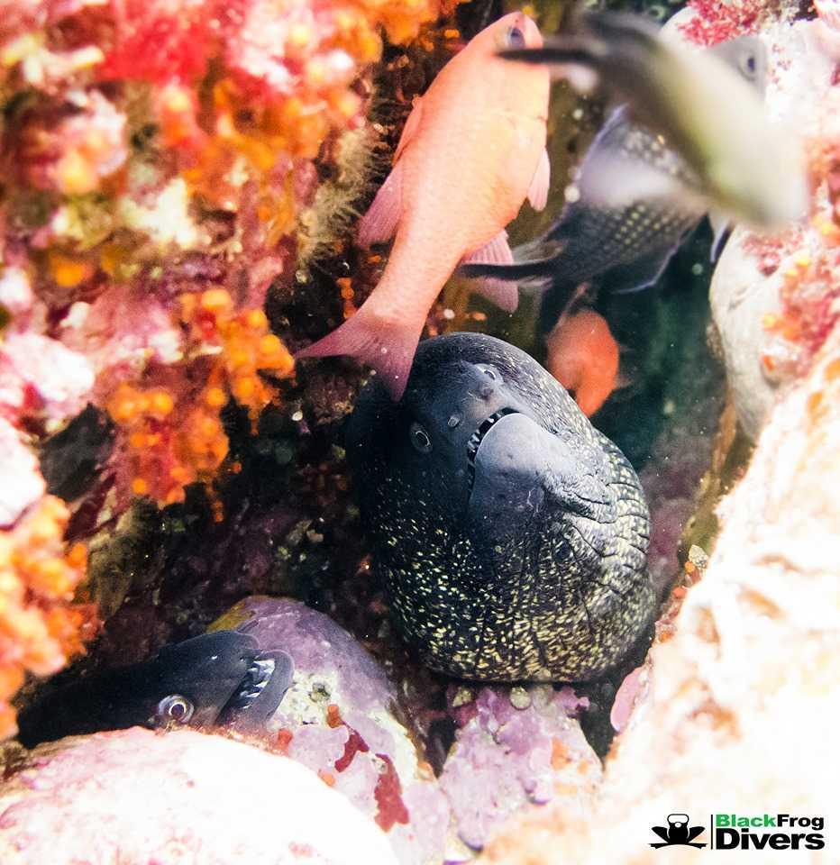 Hamelin: Inmersión de buceo - Actividad  (Torrox)