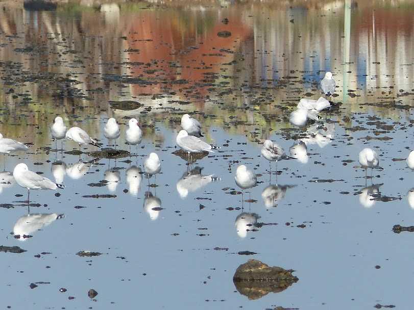 Puesta de sol y aves en la Reserva de la Biosfera de las Marismas del Odiel