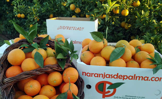 Oranges from Cordoba to America with Fray Junipero