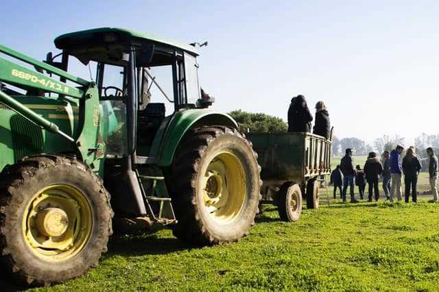 Visita a una ganadería de Toros Bravos en Sevilla