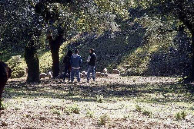 Visita la dehesa y bodegas naturales en Jamonez Eiriz Jabugo