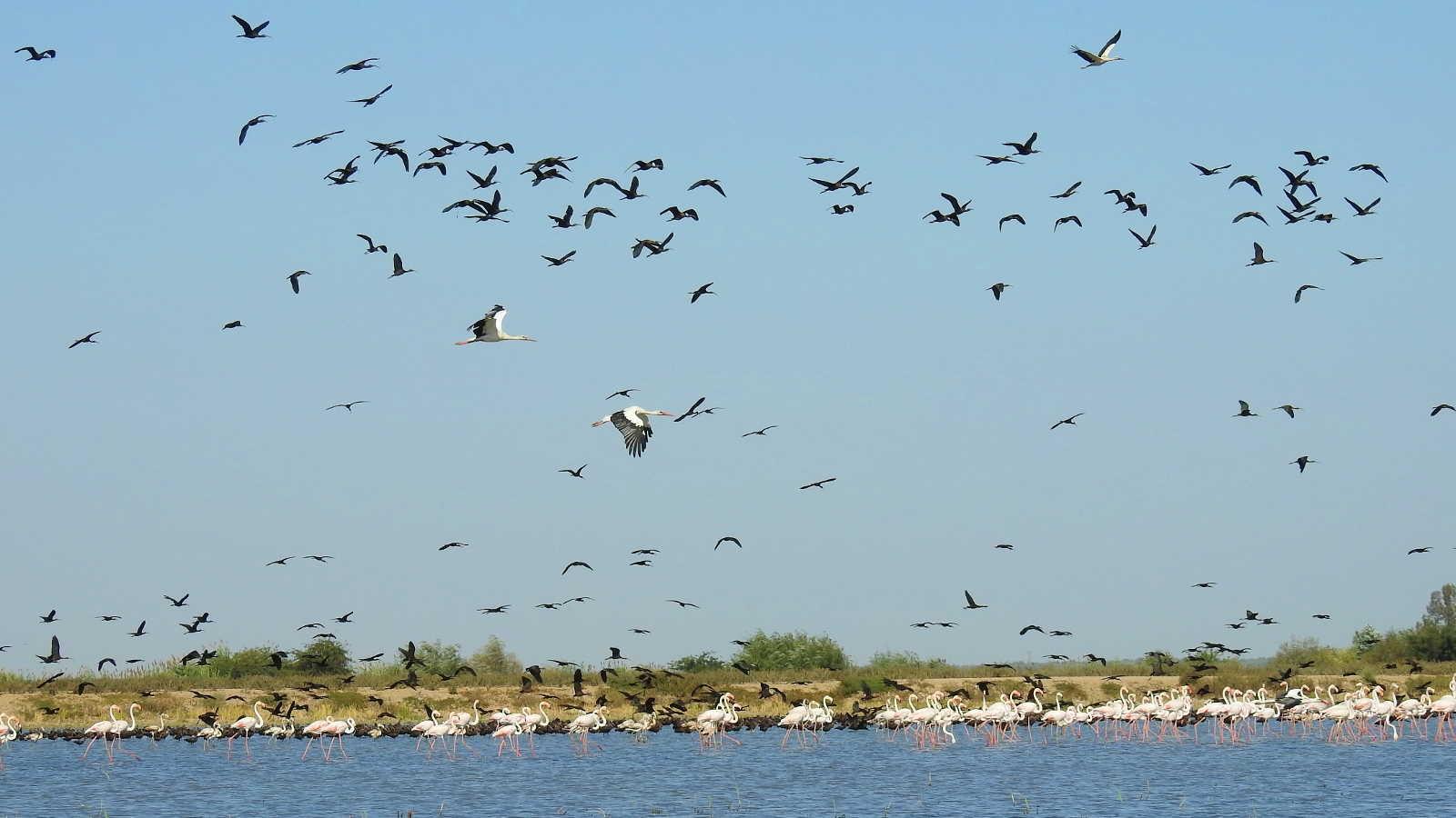 Hamelin: Taller de iniciación a la ornitología - Actividad  (La Puebla del Río)