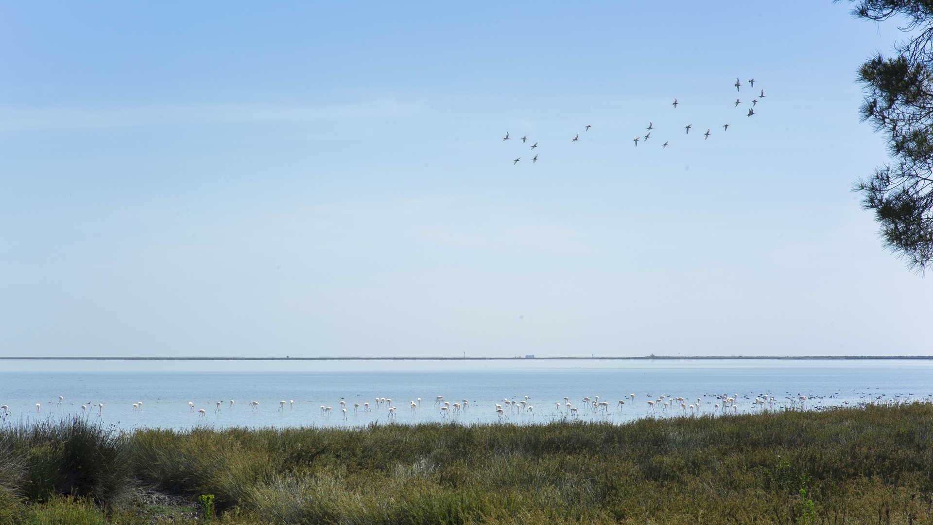 Doñana y Entorno