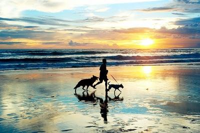 Se admiten perros. Alójate en Huelva con tu mascota