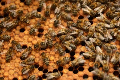 A day with bees at the