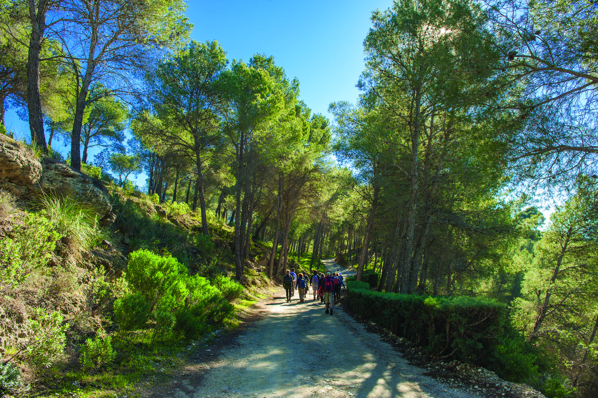 Rutas De Senderismo Web Oficial De Turismo De Andalucía